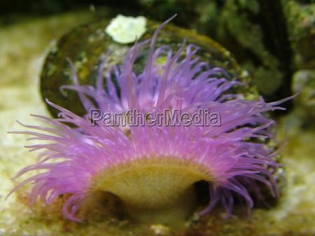 fioletowy fiolet macki lapac zaczepiac morskich