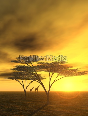 sztuka drzewo pustynia grafika zachod slonca