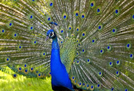 niebieski kolo opona cog zwierze ptak