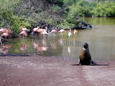 galapagas raj dla dzikich zwierzat