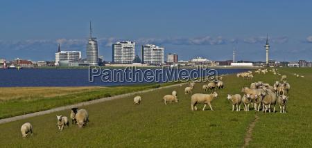 hochhaeuser wiezowce skyline grobla zapora owca