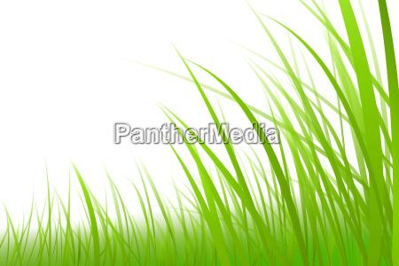 opcjonalne zielony ilustracja zdzblo trawy trawniczek