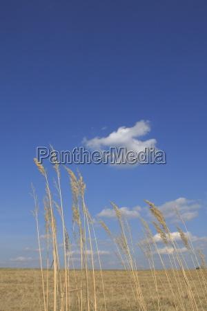 rolny gospodarstwo rolnictwo essen firmament niebo