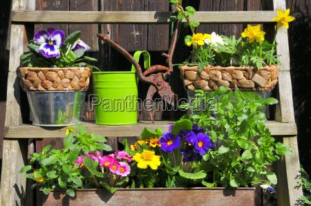 schodek schody ogrod ogrodek sadzenie sadzic