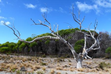 wyspa rottnest w australii
