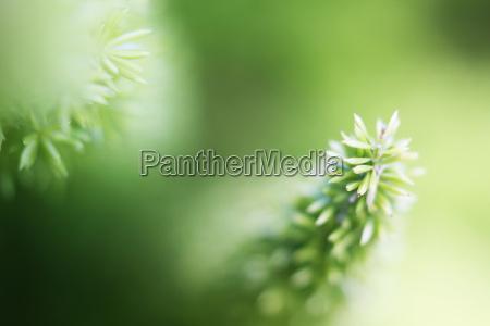 ogrod ogrodek zielony ostry tiefenschaerfe pikantny