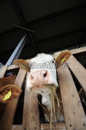 pastewnepasza dla zwierzatpasza dla zwierzatkrowawolowinawolowinazwierzat gospodarskichzwierzat