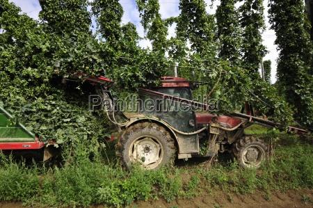 owoceowoce hophoproslinaroslinyrolnictwoprodukcja roslinnaporzadek gruntow rolnych gospodarki