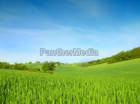 greenfield na blekitnym niebie