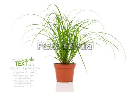zielony houseplant zielone zielona zawod roslina