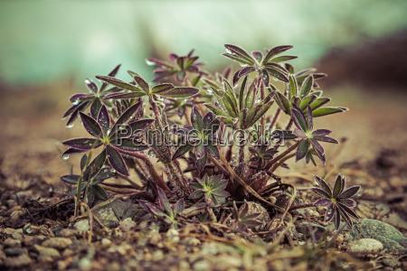 zielony fauna liscie zwir wiosna krynica
