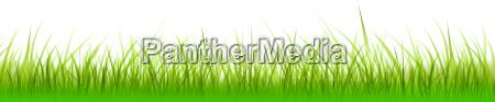 grafika ilustracja rozszerzenie zdzblo trawy trawniczek
