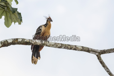 jazda podrozowanie kolor ptak poziome poziomo