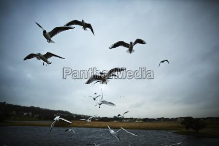 ptaki irlandia pejzaz krajobraz natura skrzydla