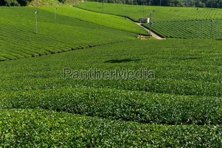 niebieski herbata piekny mily lisc jazda