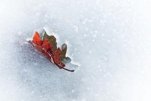 Jesień Zima